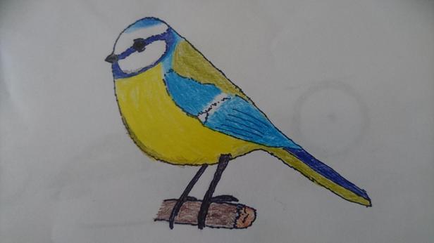 A lovely blue-tit