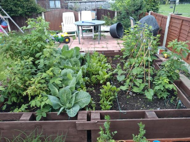 Progress of the vegetables planted