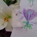 Parts of a flower by Tess
