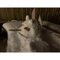 Archie's snow rabbit