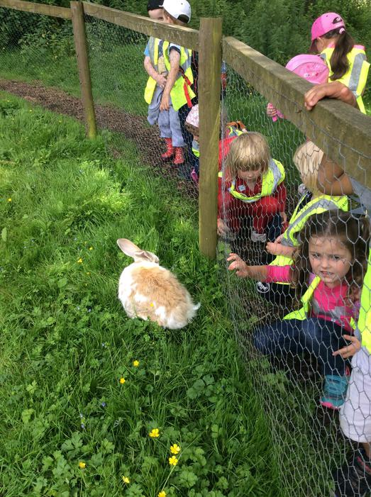 We also saw rabbits..