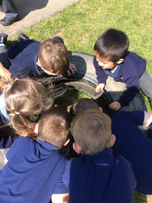 We found lots inside the big tyres!
