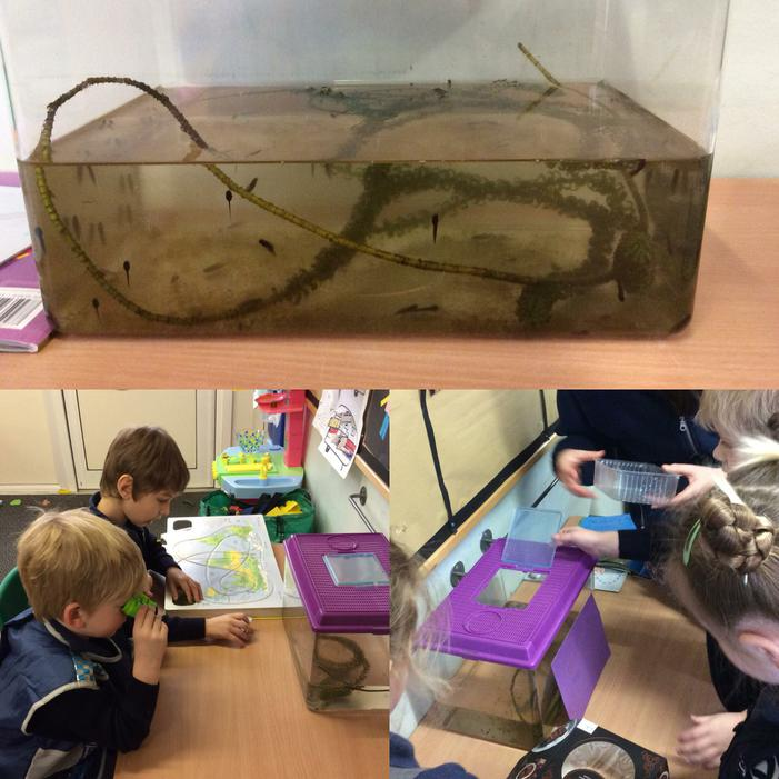 Our tadpoles were so tiny when they arrived..