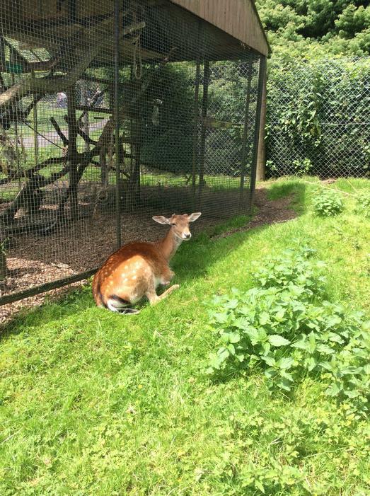 ..deer..