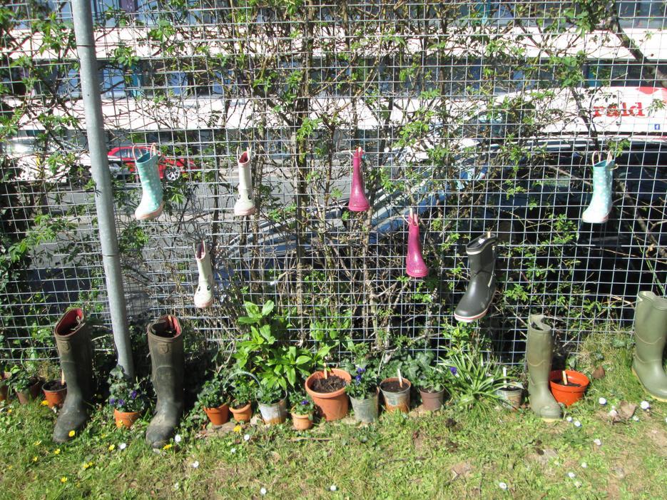 More Science Week seedlings