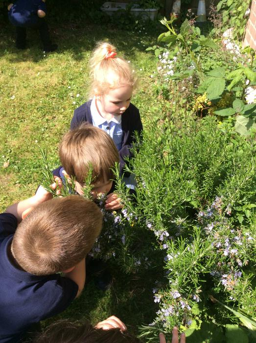 We enjoyed smelling different plants.