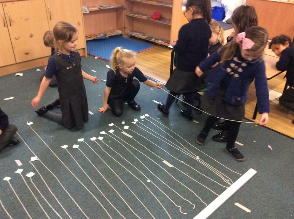 We even measured the length of different penguins.