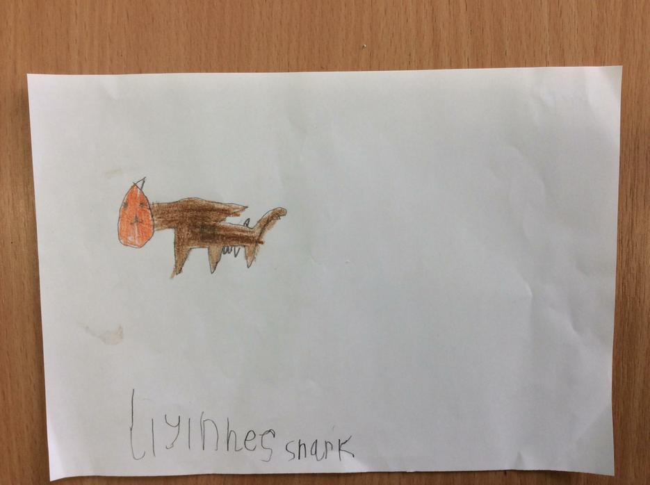 Perez's lioness-shark