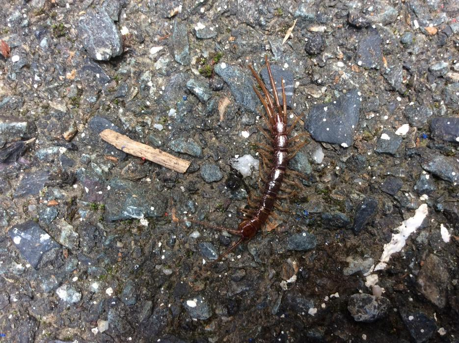 Is this a millipede?