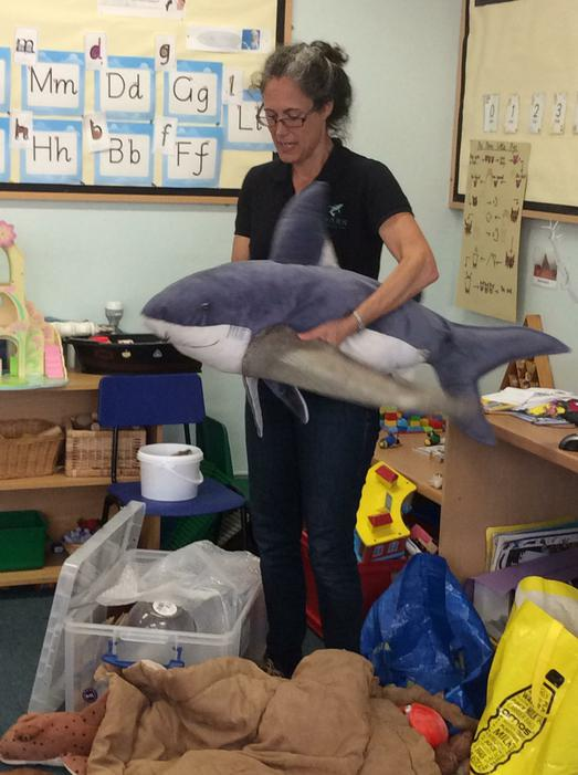 We learnt how a shark swims underwater.