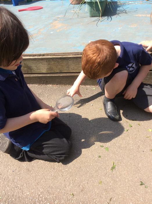 We used magnifying glasses to look for insects.