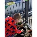 Aiden is growing plants