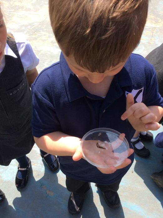 Everyone loved finding different insects.