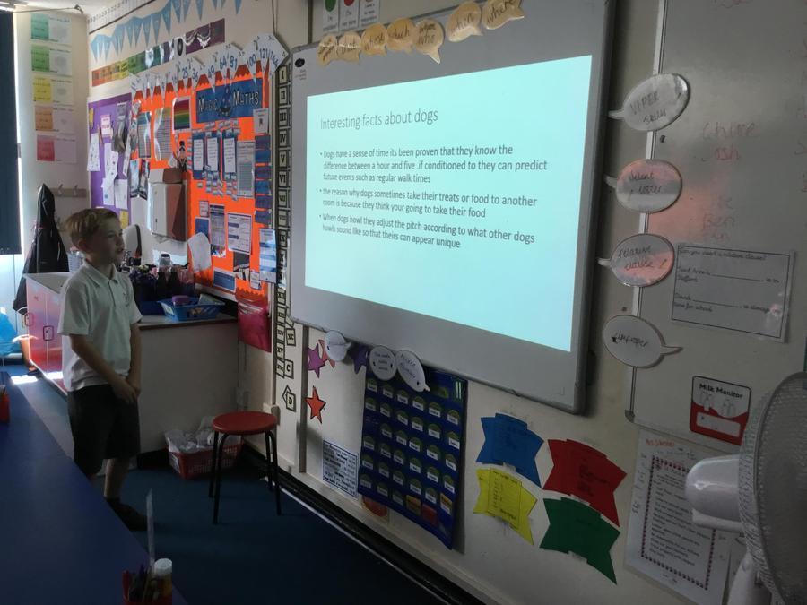 Joe- A presentation about dogs