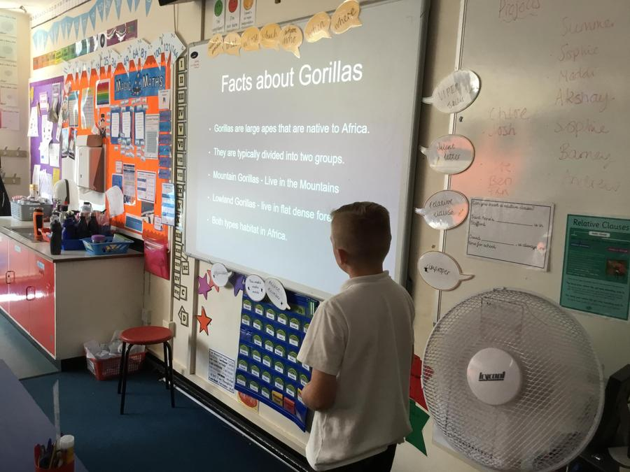 Joshua- A presentation about gorillas