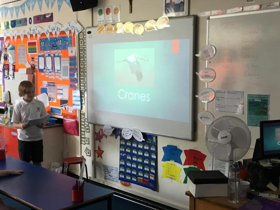 Eoin- A presentation on cranes