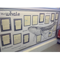 Year 4's beautifully illustrated writing display.