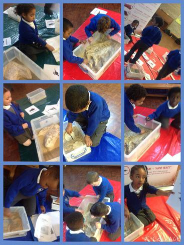 We are Paleontologists!