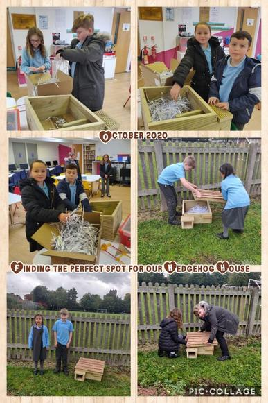 School Council members busy making our Hedgehog house suitable for new guests.