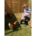 Reading to the chickens!