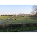 Our favourite farm viewing spot.