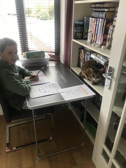 Noah and cat do maths!