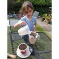 Mollie's soil investigation