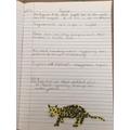 Luke's jaguar factfile