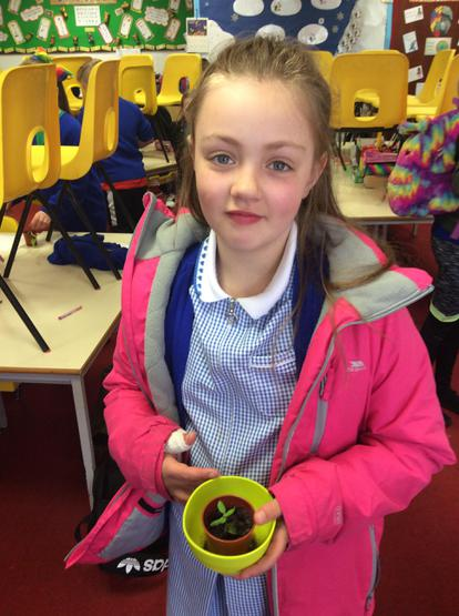 Our patient gardener-Tilly's sunflower is 3cm tall