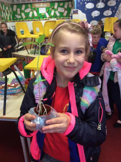 Our winner, Wiktoria's sunflower at 28cm so far!