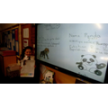 Endangered animals presentation