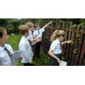 Hedgerows support large habitat