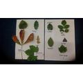 Classifying trees