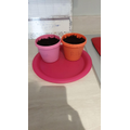 Talulah has planted sunflower seeds.