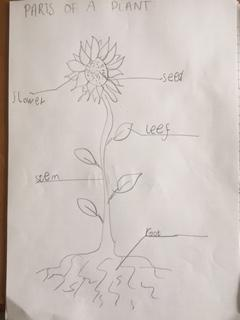 Parts of a plant by Ashton