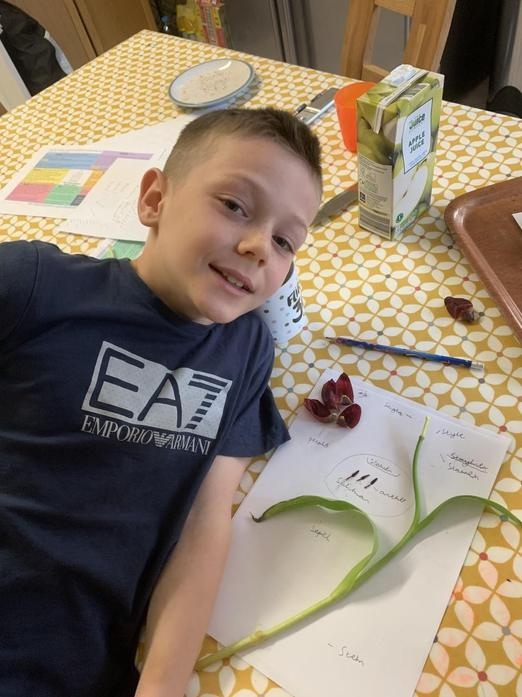 Joe and his work on plants