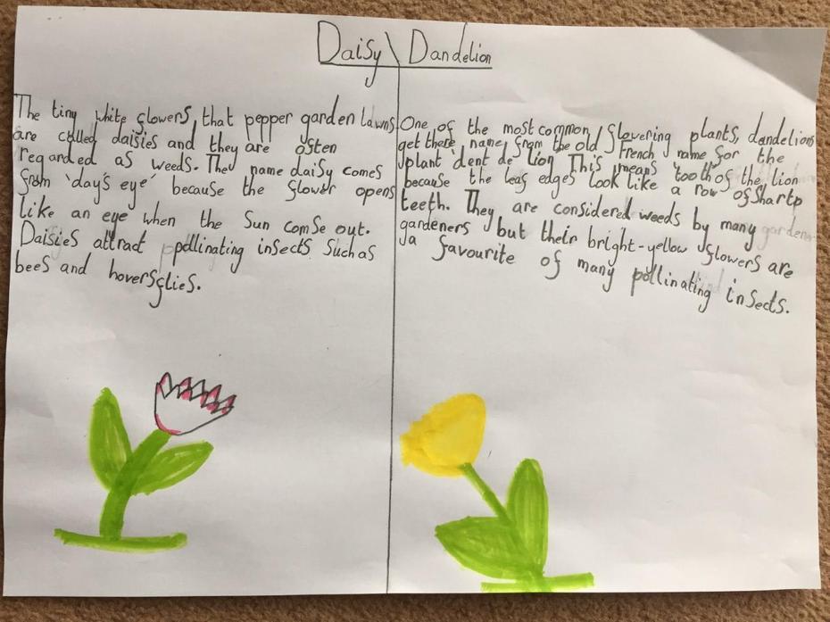 Daisy and Dandelion work from Aleksandra