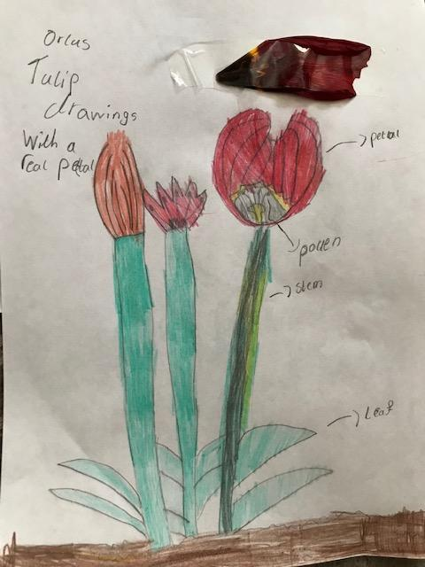 Plant labeling by Orla