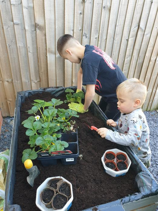 Tristan's planting project