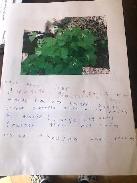 Reuben's great work on Plants