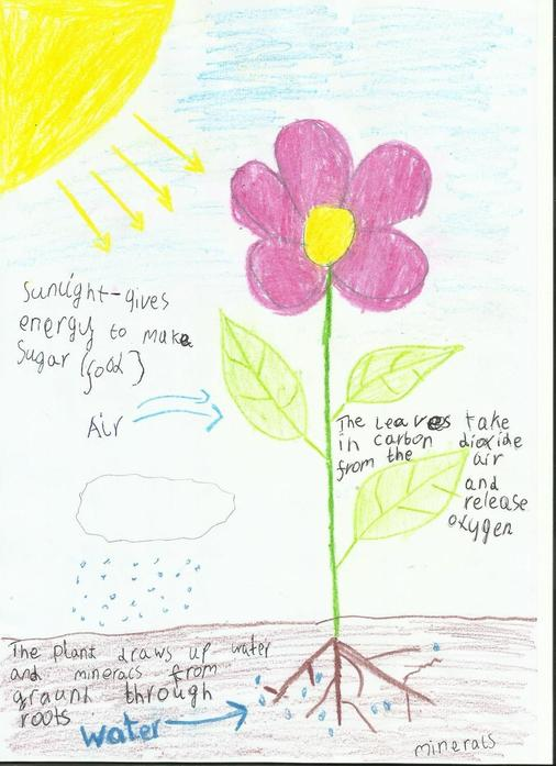 Oliwia's work on functions of a plant