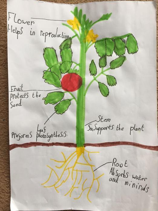 Aleksandra science labeling of a plant