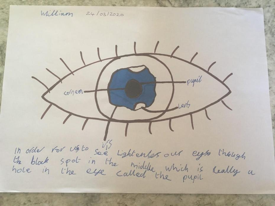 William's science work on light and how we see