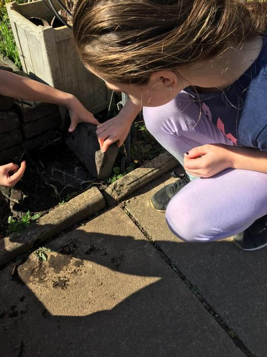 Finding different mini beasts