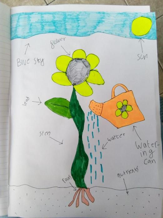 Label of a flower by James