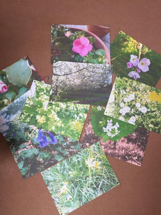 Flowers Aleksandra found