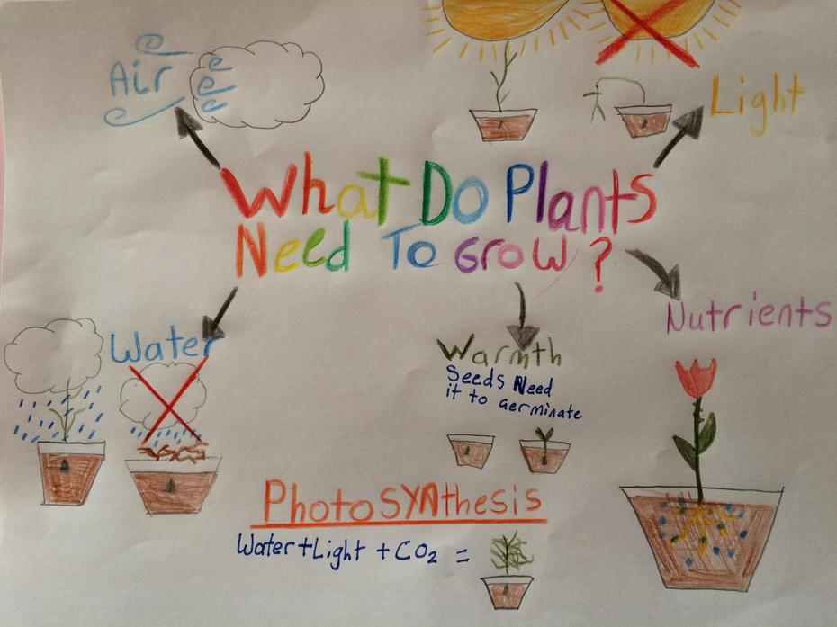 What do plants need to grow? by Neve