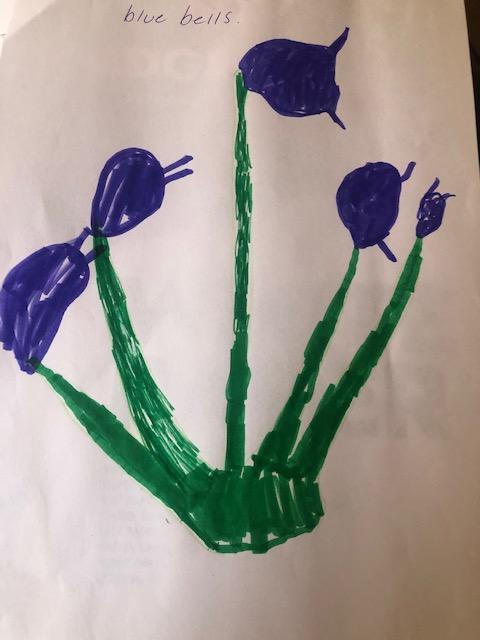 Bluebells by Reuben
