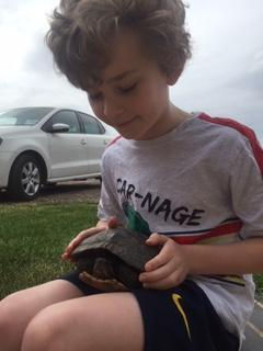 Ashton found a turtle at his mom's work
