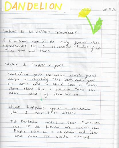 Zuzanna's Dandelion science work